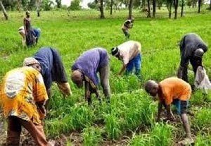 Venturing into farming with loans is risky – John Dumelo